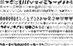 Bird Drawing Vector Set Free CDR File
