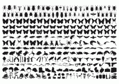 Insect Silhouette Vector Art CDR File