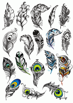 Peacock Feather Vector Set Free CDR Vectors File